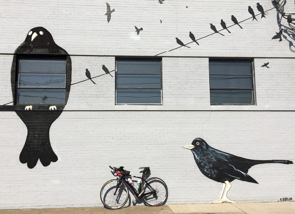birds wire bike tweet