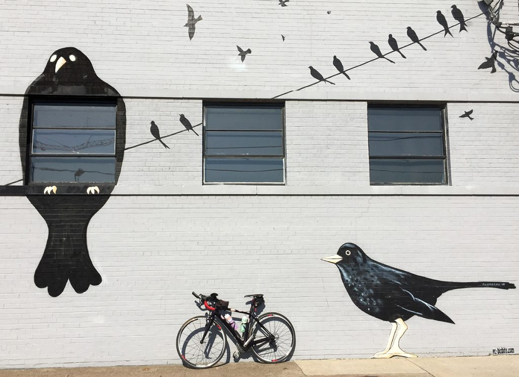 birds wire bike tweet